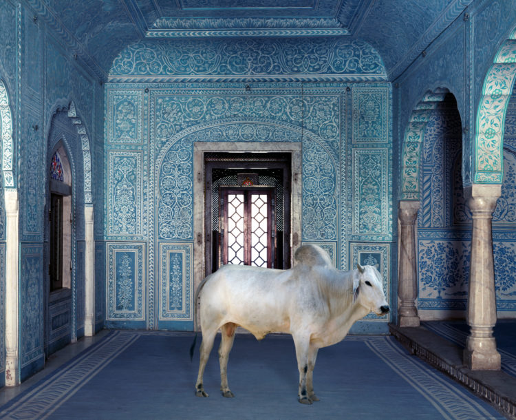 Karen Knorr — AWARE Women artists / Femmes artistes