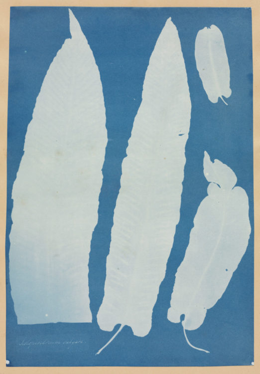 Anna Atkins — AWARE Women artists / Femmes artistes
